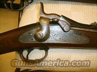 1873 and 1884 Springfield Rifles