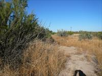 40+/- Acres land with 1320' paved road frontage, Pecos County TX