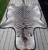 Zebra rug, full size, padded, double felt border, 74x124, fantastic condition