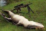 Gator Season is Here! – Alligator Hunting in Florida 101