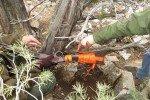 Nevada Park Rangers Find Winchester Model 1873 Under Tree