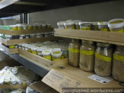 Whether You Are Saving Seeds Or Ing To Save If Dry Them Out