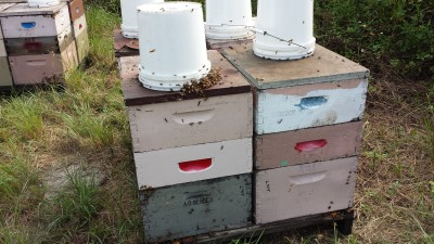 This is the design that a local beekeeper uses near me. He mounts 4 hives on a pallet, with a deep brood box super and two medium honey supers. The white buckets are to attract love bugs so they don't bother the bees.