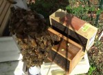 Prepping 101: Installing Package Bees