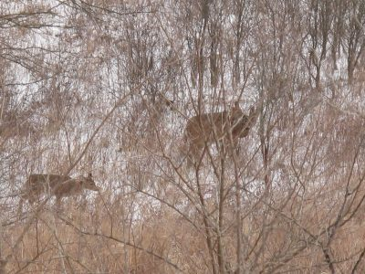 Don't ignore weather patterns, especially approaching fronts, which can kick deer movement into overdrive, particularly in the winter.