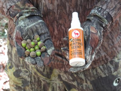 Protein-rich acorns are a deer's favorite foods. Enhance the benefit of their presence by spraying the area with an attractant spray.