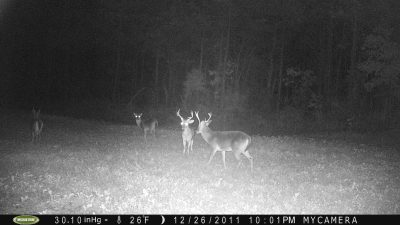 Keep cameras running even after hunting season ends to take an inventory of the bucks for next year.
