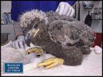 Eaglet Found in Nest Where Texas Teen Killed Bald Eagle