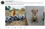 NFL Quarterback Forced to Defend Bird Hunting after Twitter Backlash
