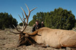 Bull Elks are Bugling…Wherever They Are
