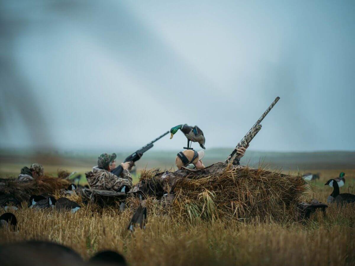 North Dakota Duck Hunt with Savage Arms' New ReneGAUGE Shotgun