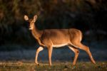 Wisconsin Judge Facing Charges for Illegal Hunting Practices