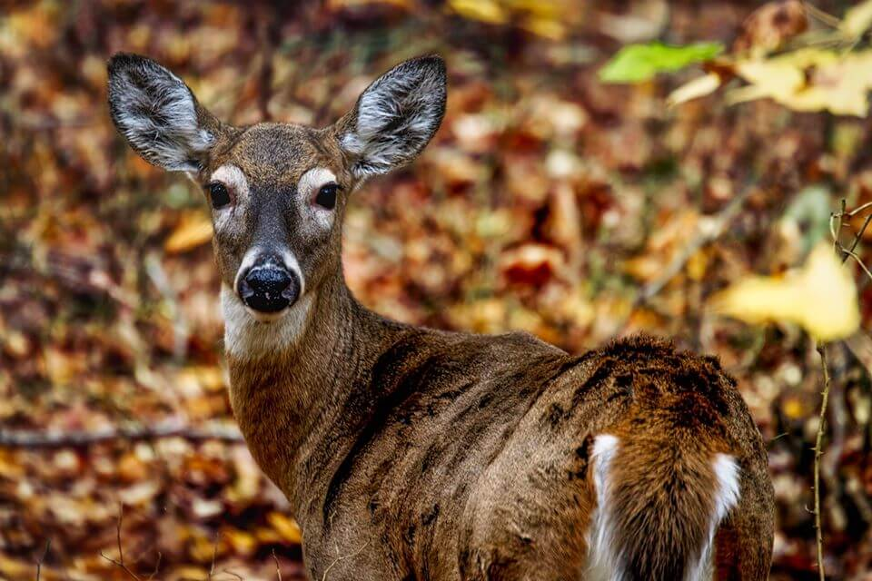 Maine Expanding Crossbow Hunting Rules for Three Years