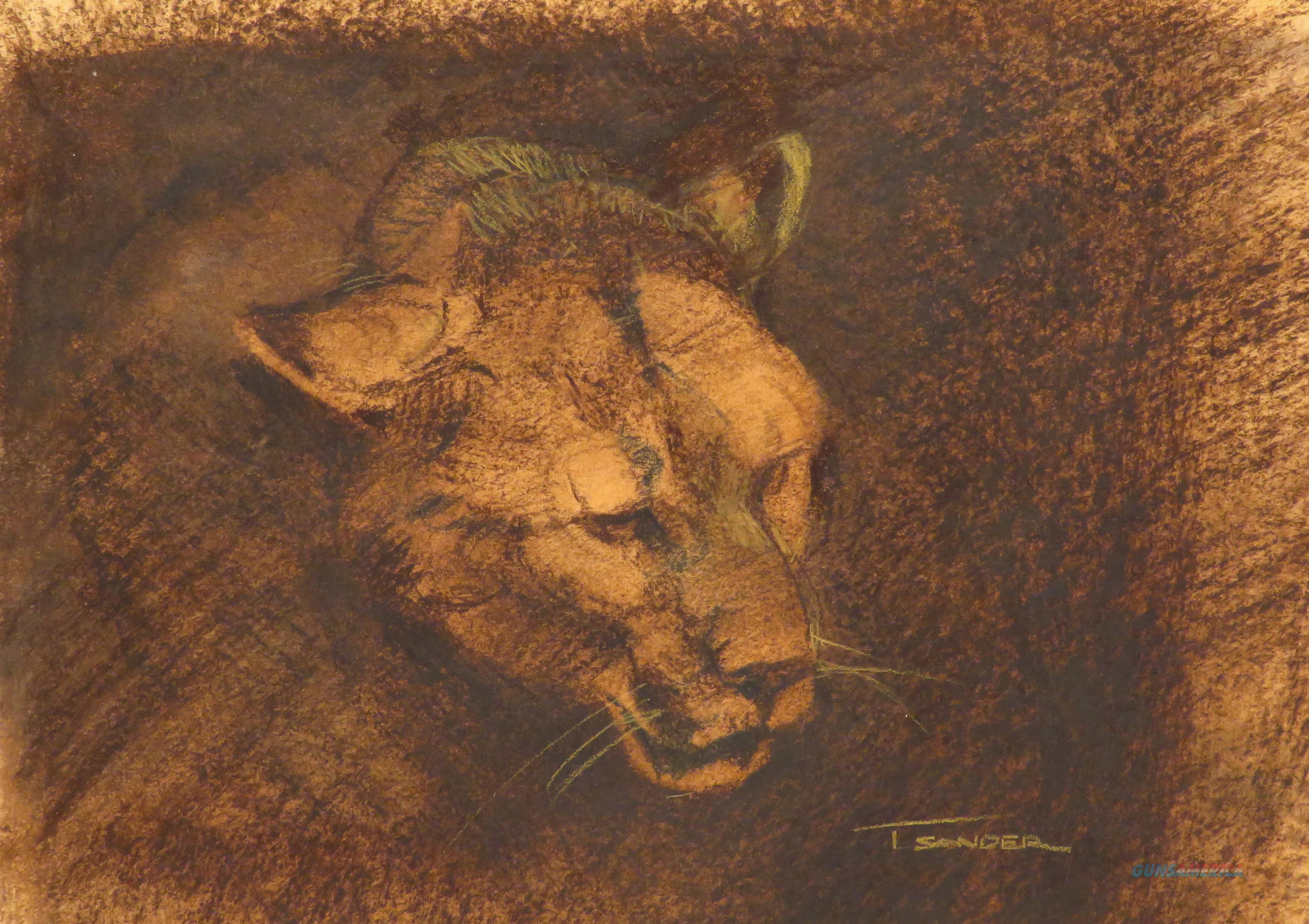 Tom Sander original pencil sketch, cougar, 10x12 inches live area  Non-Guns > Artwork