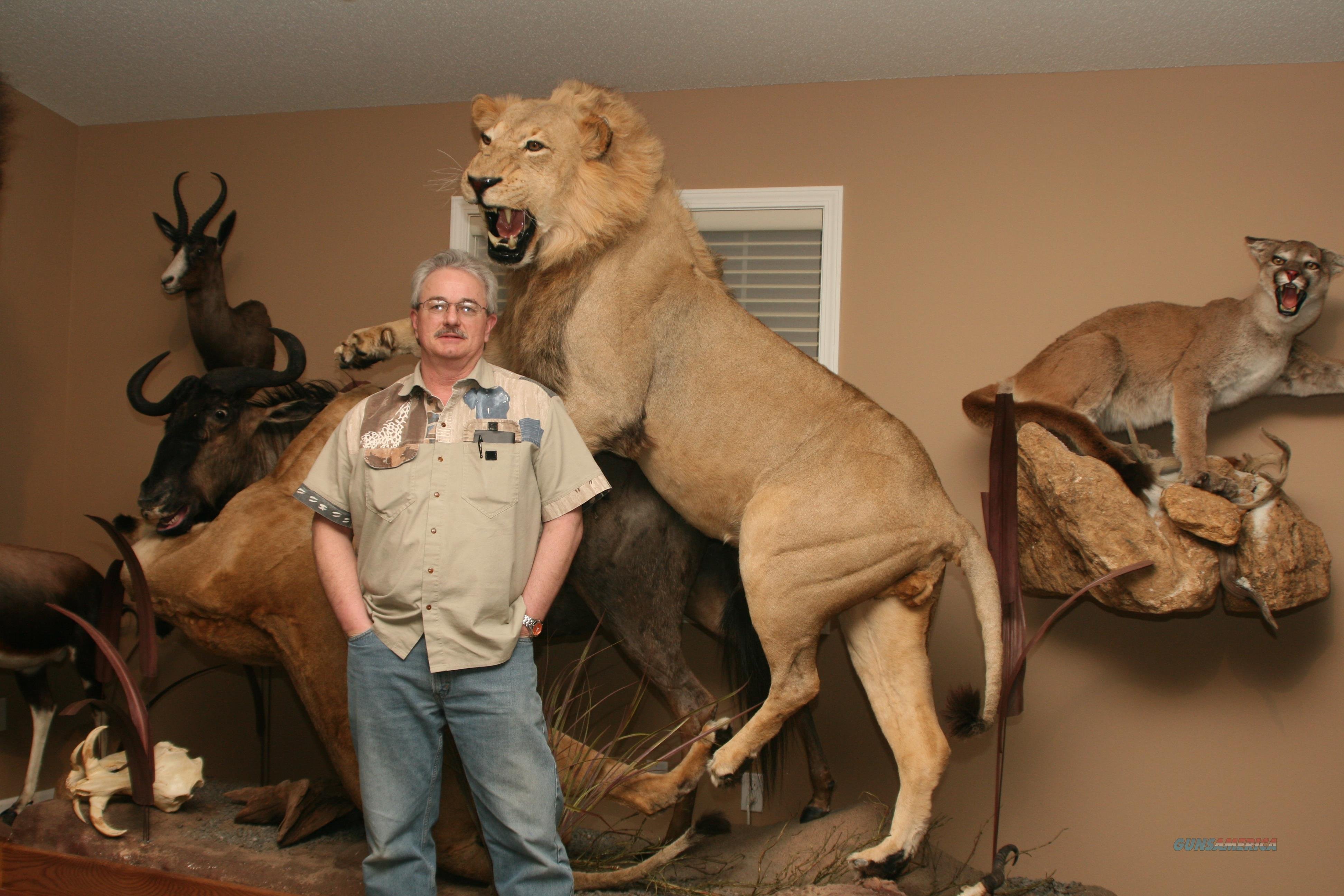 African Lions/Blue Wildebeest Full Body Mount  Non-Guns > Taxidermy Hides/Mounts, etc.