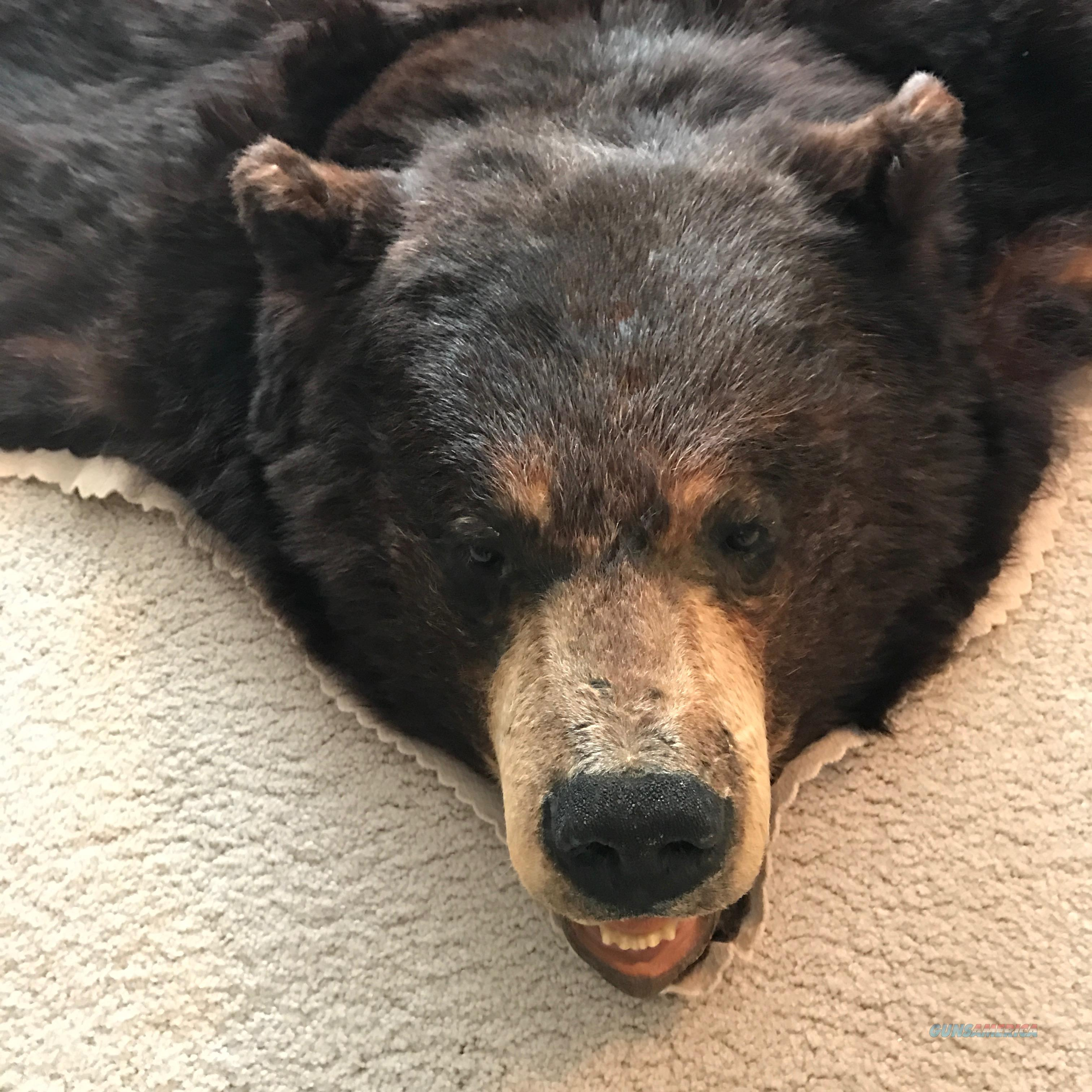 Large Male Black Bear Rug For Sale