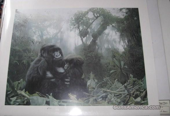 "Terry Isaac ""Refuge"" Gorillas  Non-Guns > Artwork"
