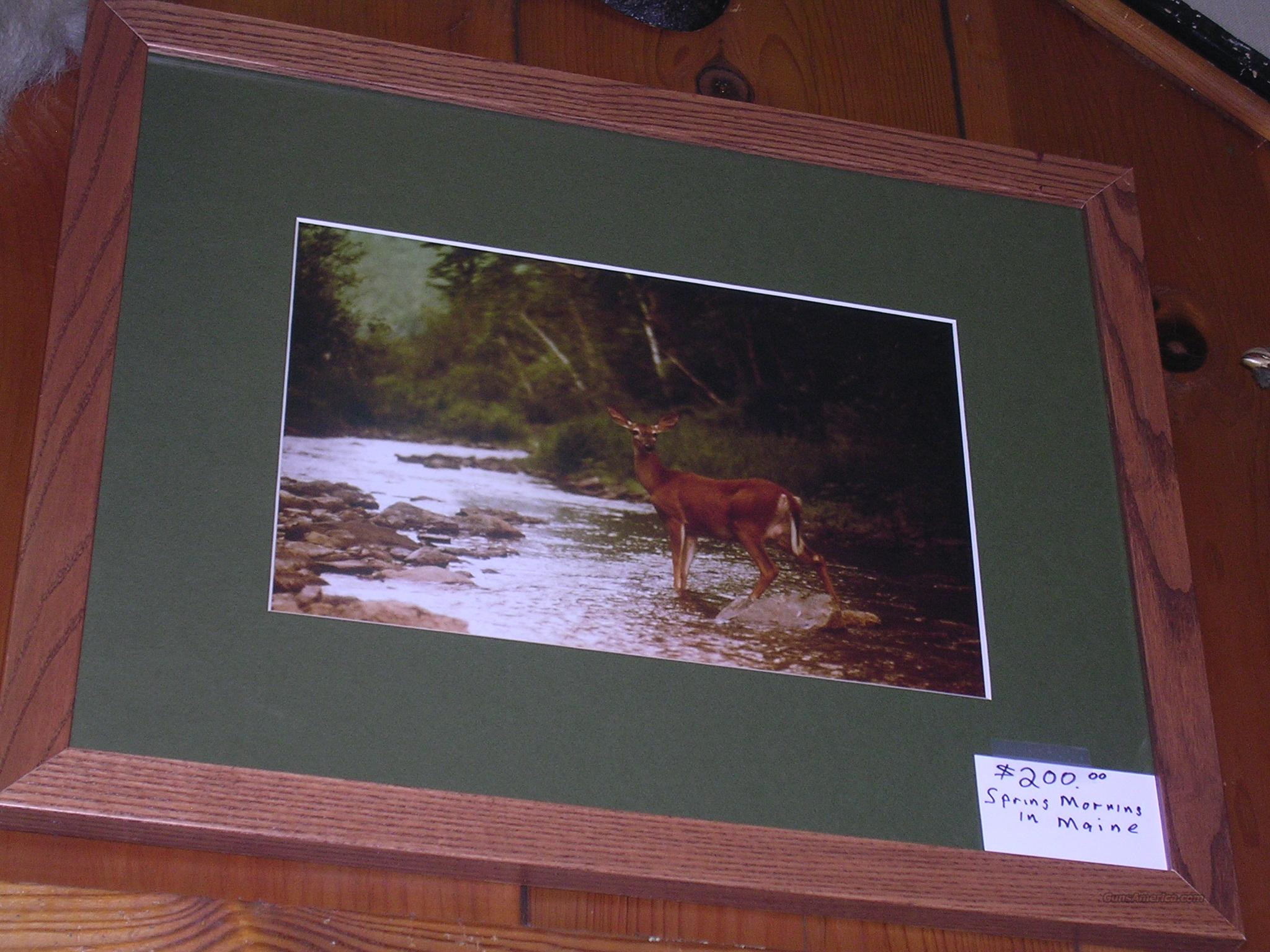 A Spring Morning in Maine -Original Photograph Framed  Non-Guns > Artwork